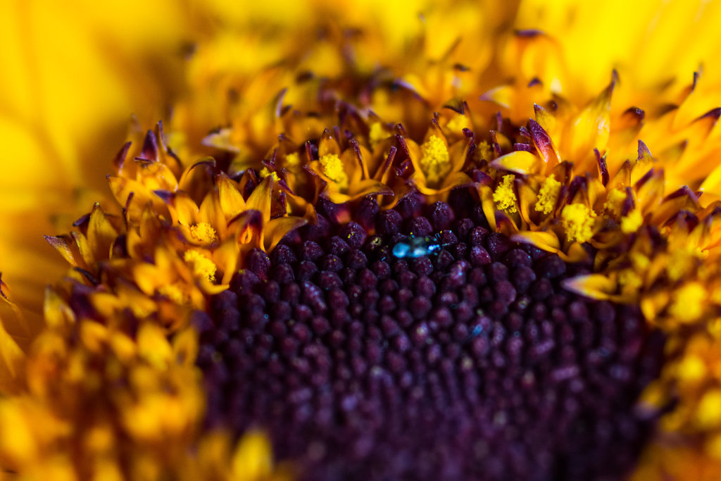 Bug in a flower